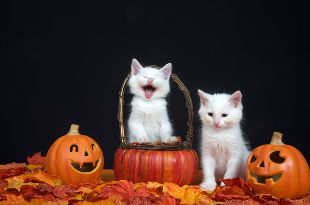 Top-10-Cat-Halloween-Costumes-to-Hiss-At
