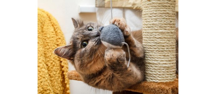 Jak zachęcić kota do korzystania z drapaka?