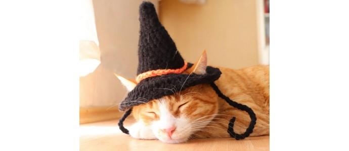 Bezpieczeństwo kotów w Halloween: Wskazówki, które możesz zastosować